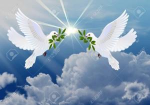 Colombes-de-la-paix-avec-branche